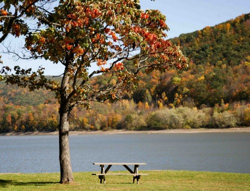 Picnic Area By Water